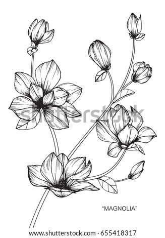 Magnolia flowers drawing sketch lineart on stock vector royalty magnolia flowers drawing and sketch with line art on white backgrounds mightylinksfo