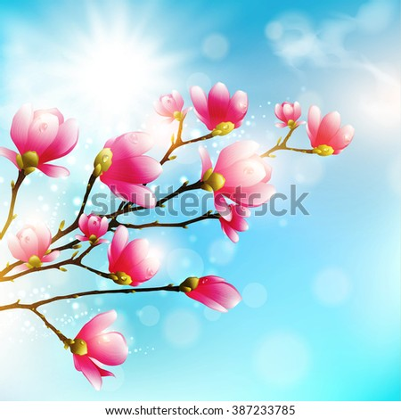 Magnolia Spring Pink Flower Blossom Over Blue Sky in Sunny Day - stock vector