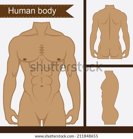Male body - stock vector