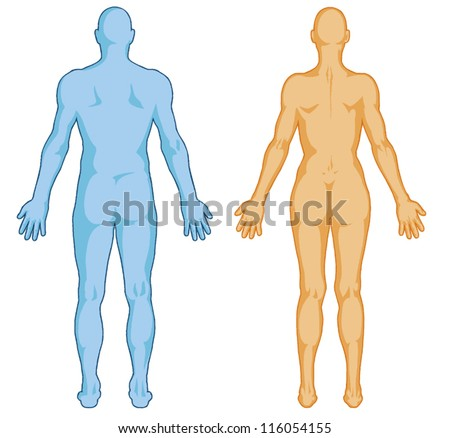 Human Body Outline Vector Human Body Outline ã¢