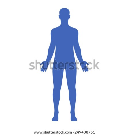 Male human body belonging to an adult man - stock vector