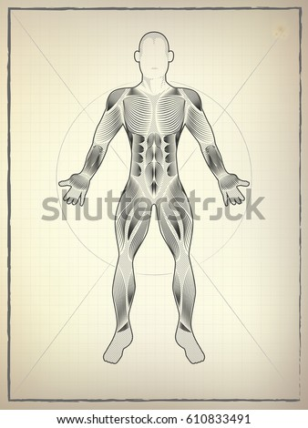 Male Muscular Anatomy Vector Scheme Drawing Stock Vector HD (Royalty ...