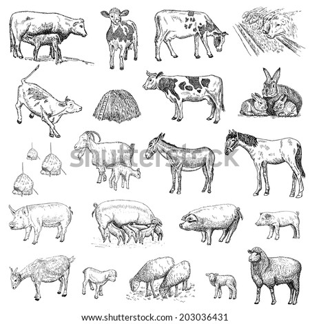 mammals. hand drawing set of vector sketches - stock vector