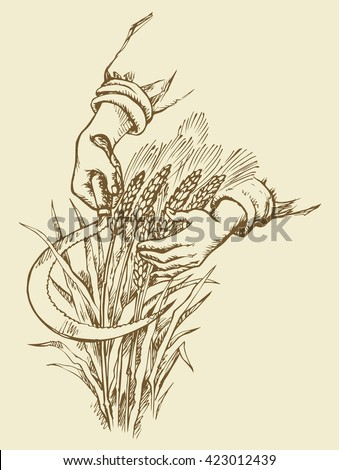 Man's hardwork palm collect by old metal falx ripe dry golden ear spica. Outline ink drawn picture sketch in art doodle retro style pen on paper. Closeup view and space for text on yellow background - stock vector