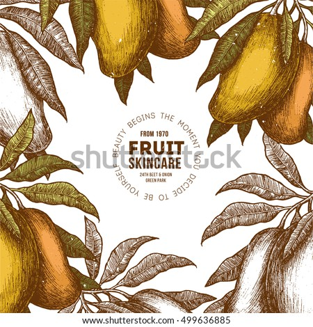 Mango tree vintage design template. Botanical mango fruit frame. Engraved mango. Vector illustration