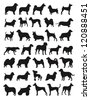 Many dog species in silhouettes - stock vector