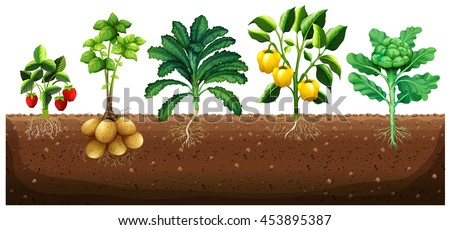 many kinds vegetables planting on ground stock vector