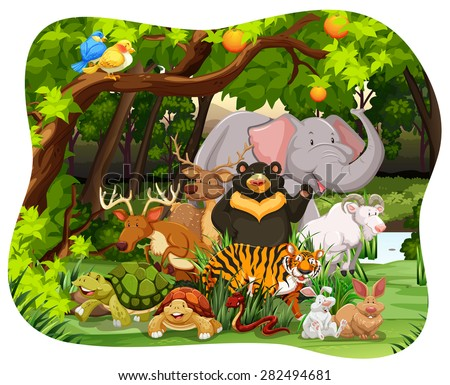 Many wildlife living together in the jungle - stock vector