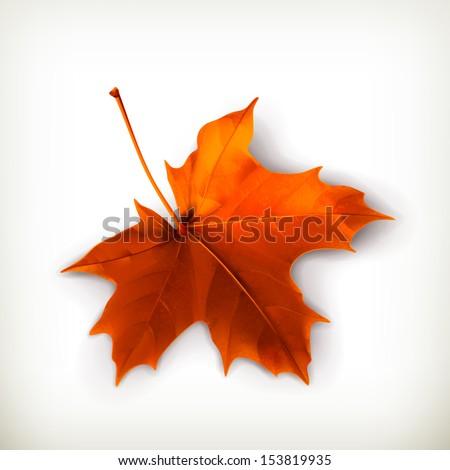 Maple leaf vector illustration - stock vector