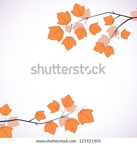 Maple tree branch. Vector background. - stock vector