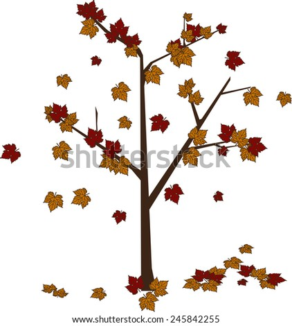 Maple tree vector  - stock vector