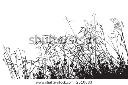Meadow Grass Silhouette, change the color as you like - stock vector