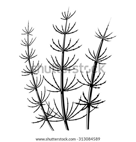 Meadow horsetail (Equisetum pratense) stylized black and white vector illustration - stock vector