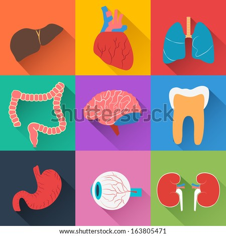 Medical health care background. Flat concept with organ. Vector Illustration, eps 10, contains transparencies. - stock vector