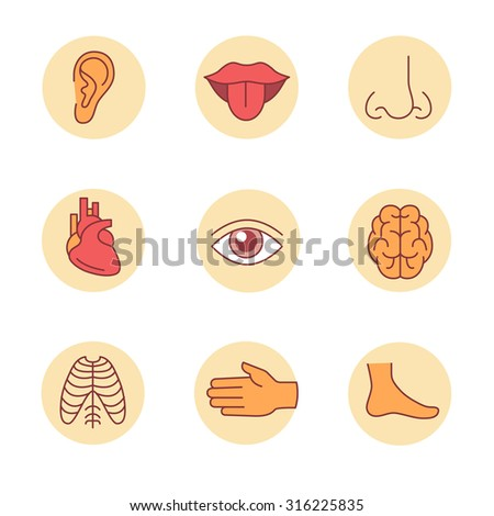 Medical icons thin line set. Human organs, senses, and body parts. Flat style color vector symbols isolated on white. - stock vector