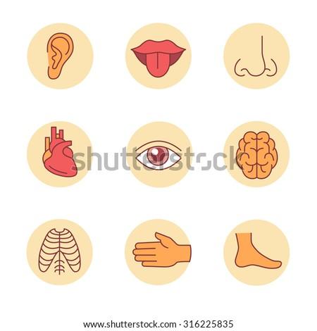 Medical icons thin line set. Human organs, senses, and body parts ...