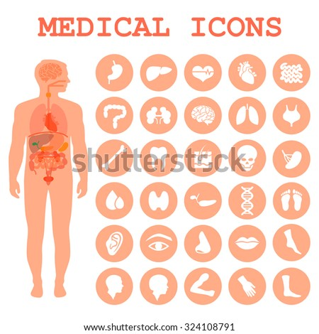 medical infographic icons, human organs, body anatomy - stock vector