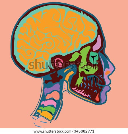 Medical X-ray scan of a male human head with skull and brain. - stock vector