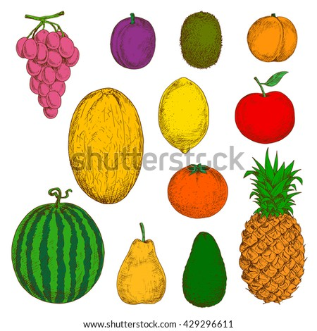 Melon and pineapple, pear and lemon, juicy orange, peach and grapes, apple and plum, green kiwi, avocado and watermelon fruits sketch symbols. Use as organic farming and healthy dessert design - stock vector