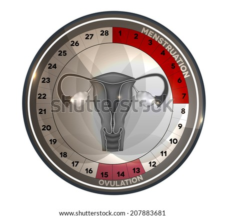 Menstrual cycle calendar, days of menstruation and ovulation. Female reproductive system anatomy at the middle, uterus and ovaries. - stock vector