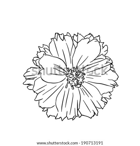 mexican flowers coloring pages - photo#13