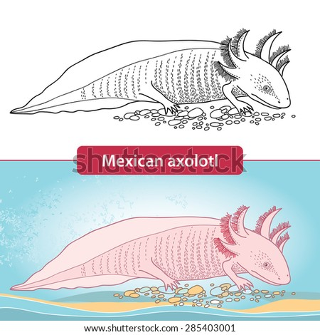 Mexican Axolotl Stock Images Royalty Free Images Vectors