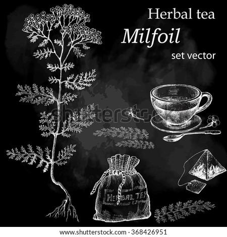 Milfoil  plant, botanical drawing. Herbal tea  set. Hand drawn.  Medicinal plant. Chalkboard background. - stock vector