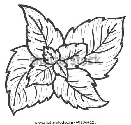 Mint Plant Coloring Pages