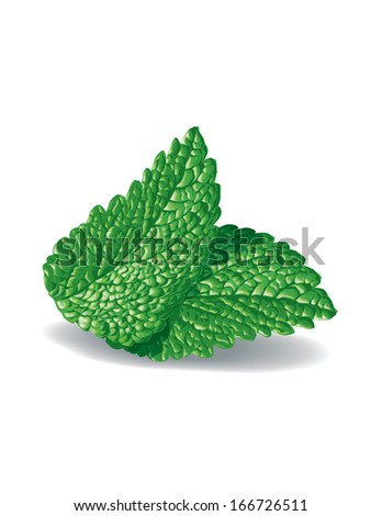 Mint leaves - stock vector