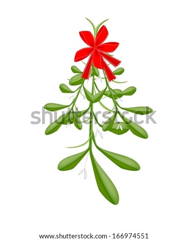 Mistletoe Bunch or Viscum Album with A Christmas Red Ribbon For Christmas Celebration, Isolated on White Background  - stock vector