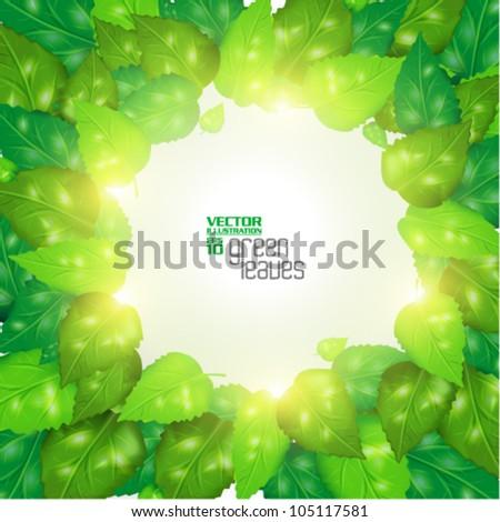 modern green fresh leaves vector design - stock vector