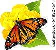 Monarch butterflies on the yellow flower - stock photo