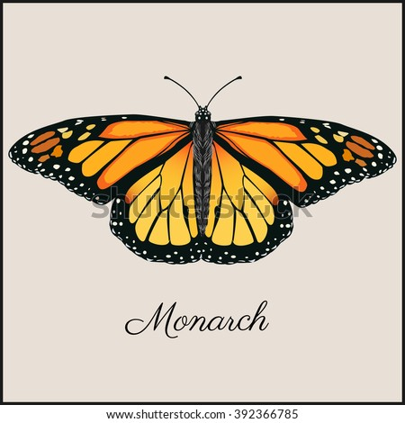 Monarch butterfly card. Flat vector illustration. Vintage beautiful card in frame for print or web.  - stock vector