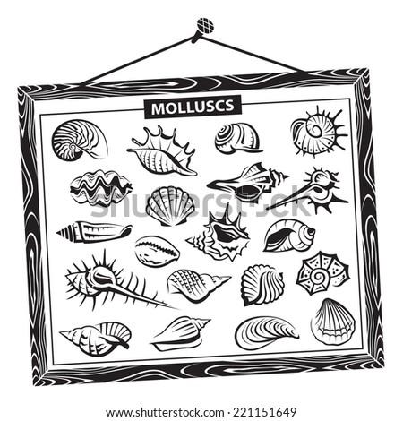 monochrome seashells set in a wooden frame  - stock vector