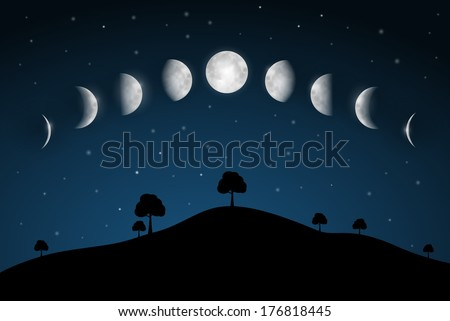 Moon Phases - Night Landscape with Trees - stock vector