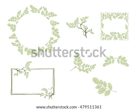 Moringa Leaf and Frame Design Collection With Copy space