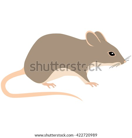 mouse on white