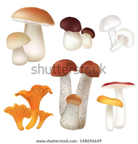 Mushroom icons set. Boletus isolated over white background vector colorful collection.