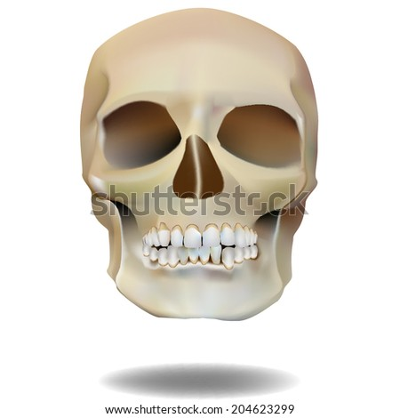 mysterious skull. mysticism