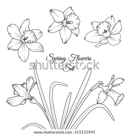narcissus daffodil spring flowers reusable isolated elements template set black and white vector design illustration