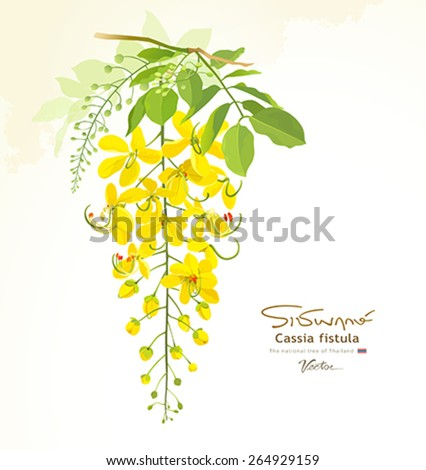National flower of Thailand, Cassia Fistula, beautiful Yellow Thai flower background, vector illustration - stock vector