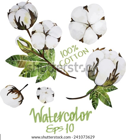 Natural Cotton. Watercolor plant. Vector set - stock vector