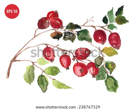 natural wild rose, treatment with herbs - stock vector