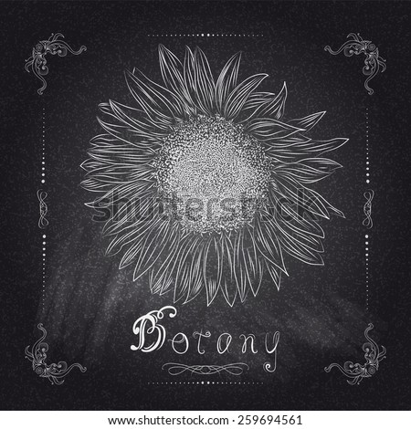 Nature background sunflower with your text vector illustration eps 10 - stock vector