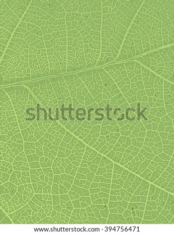 Nature background with free space for text or image. Green leaf veins texture on the toned recycled paper texture. - stock vector