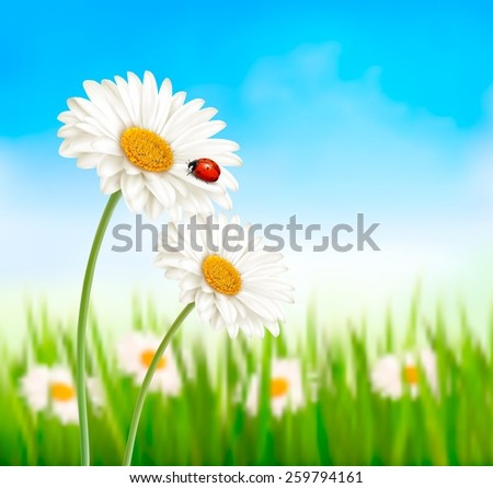 Nature spring daisy flower with ladybug. Vector illustration. - stock vector