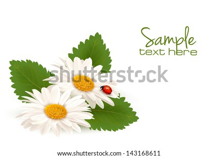 Nature summer daisy flower with ladybug. Vector illustration. - stock vector