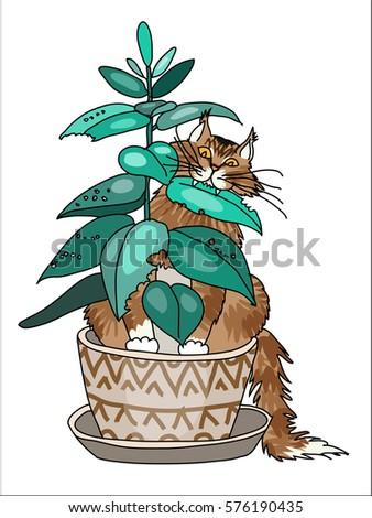 Maine Coon Cat Stock Vectors, Images & Vector Art | Shutterstock