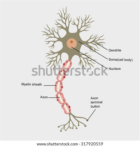 nerve cell vector - stock vector