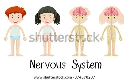 Nervous system boy girl illustration stock vector royalty free nervous system of boy and girl illustration ccuart Images